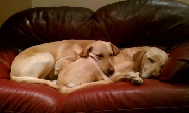 Ajax and Blake